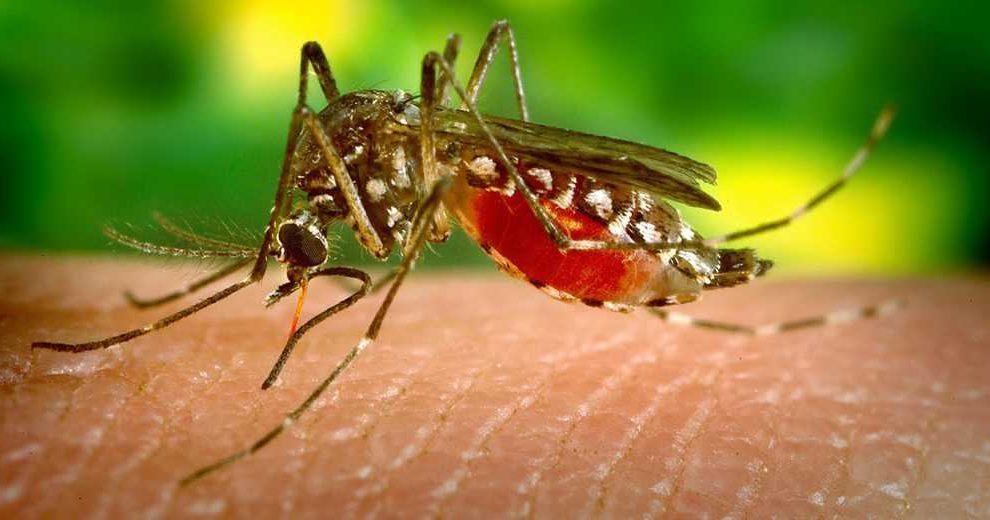 mosquito-pixabay1