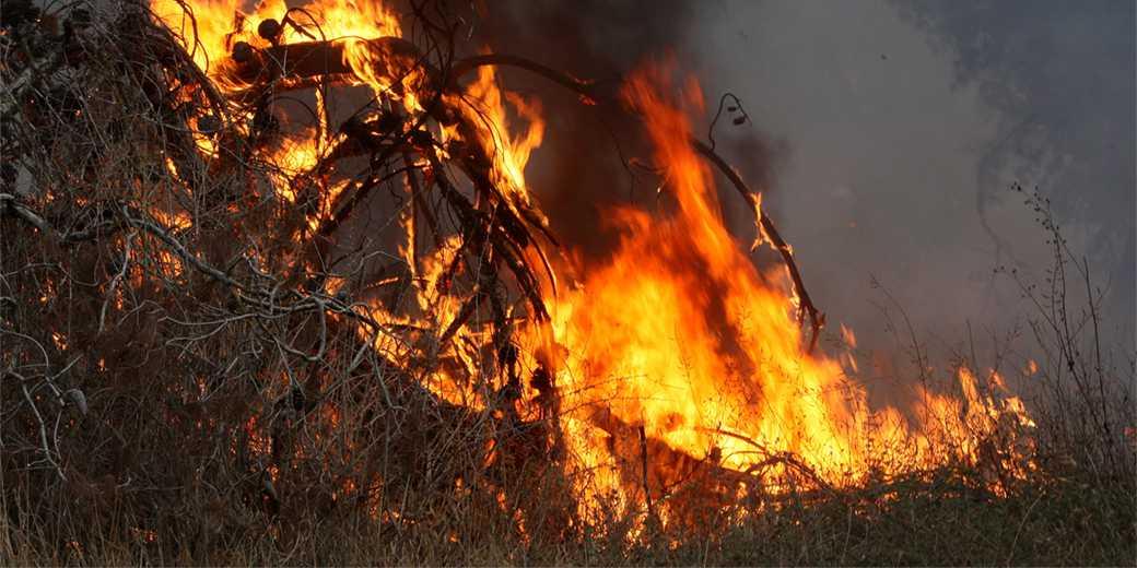 382721_Forest_fire_Elyahu_Hershkovich