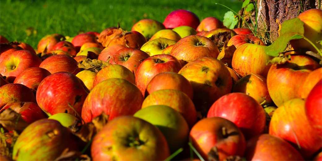 apple-Pixabay