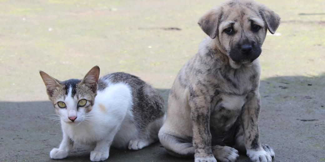 cat dog pixabay