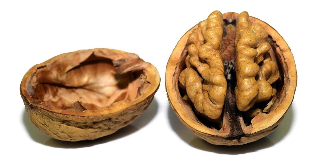walnut - pixabay