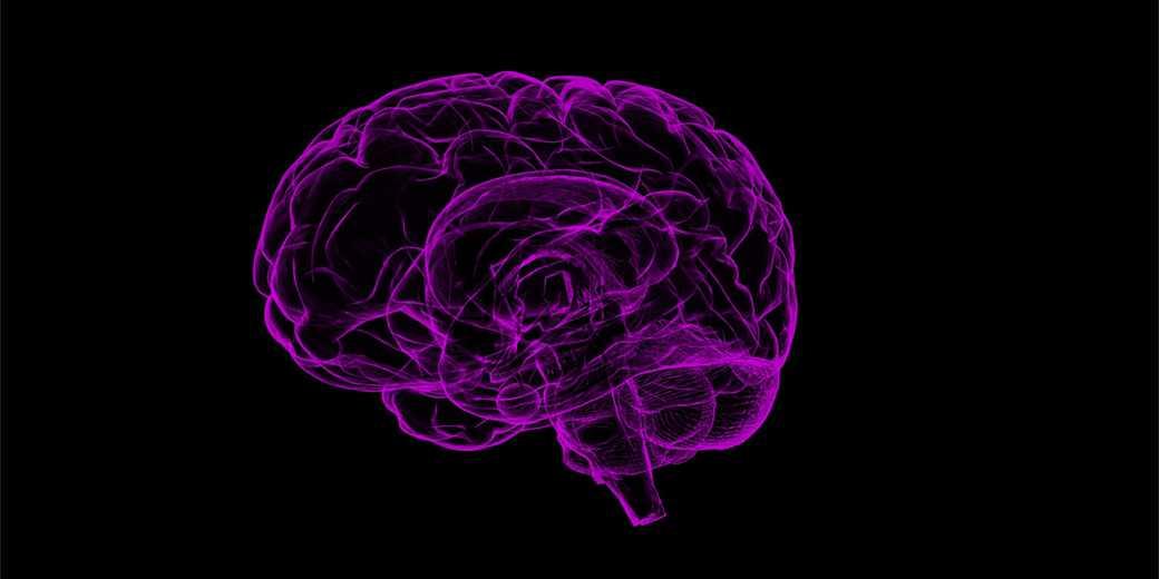 brain-Pixabay