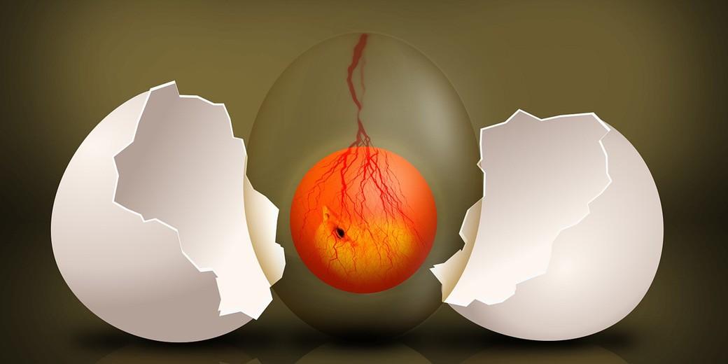 embryo-pixabay