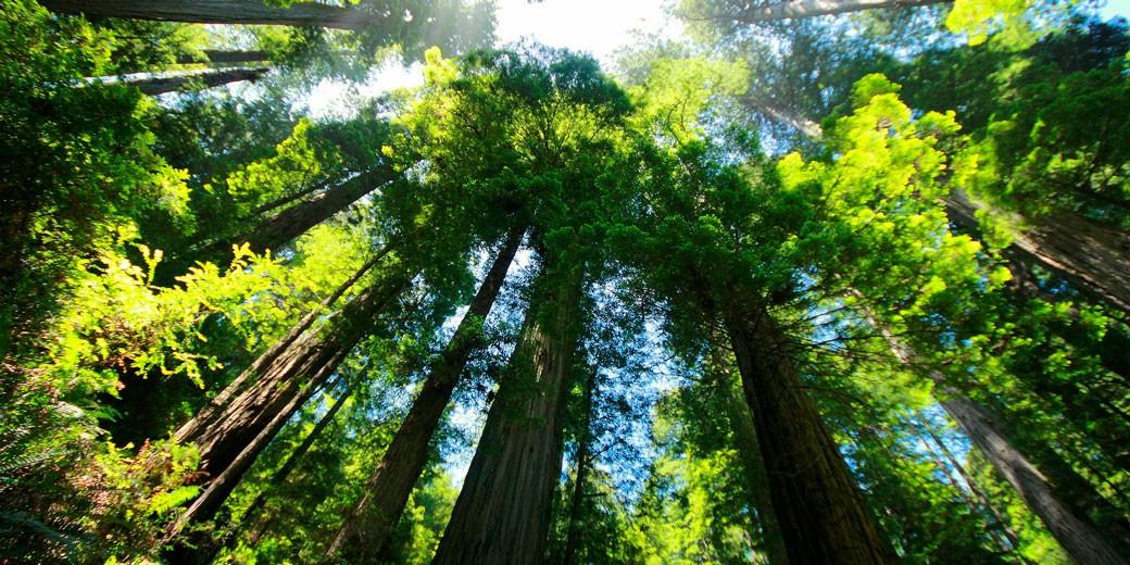 sequoia-pixabay