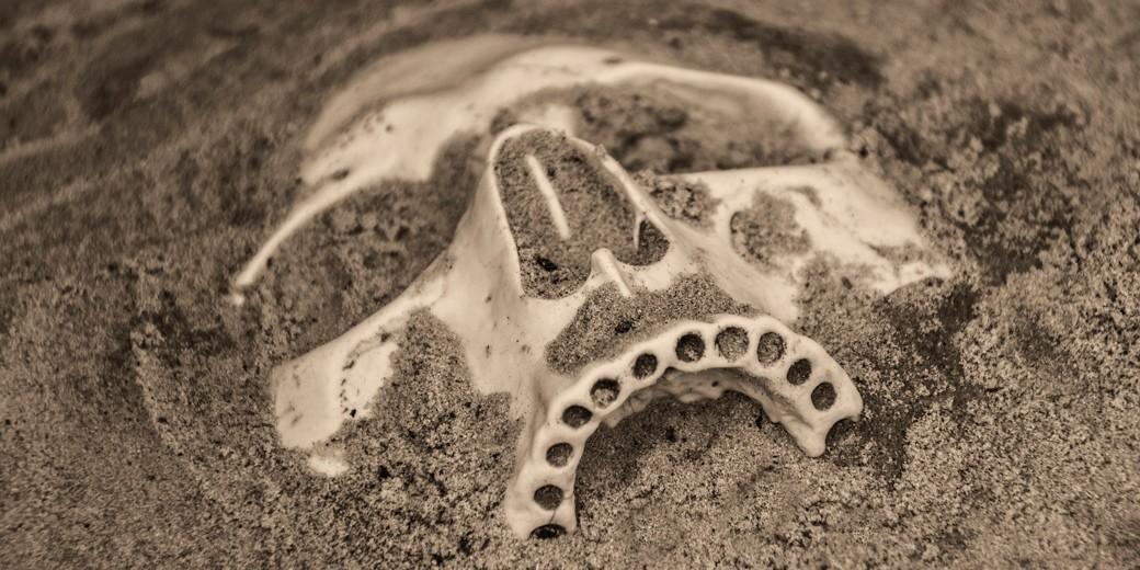 skull-pixabay