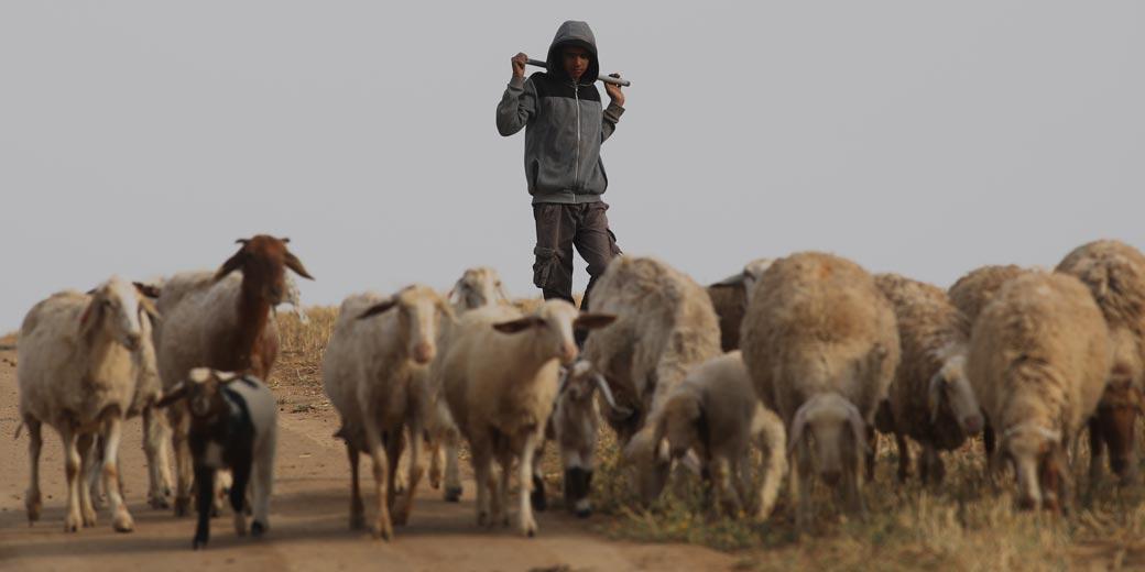 beduins-361529-ilan-asayg