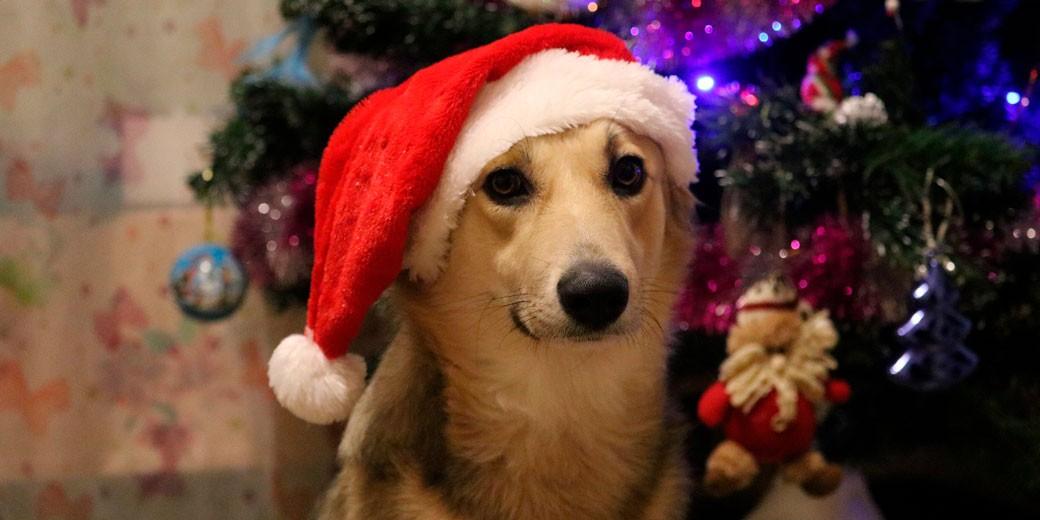 new-year-dog-pixabay