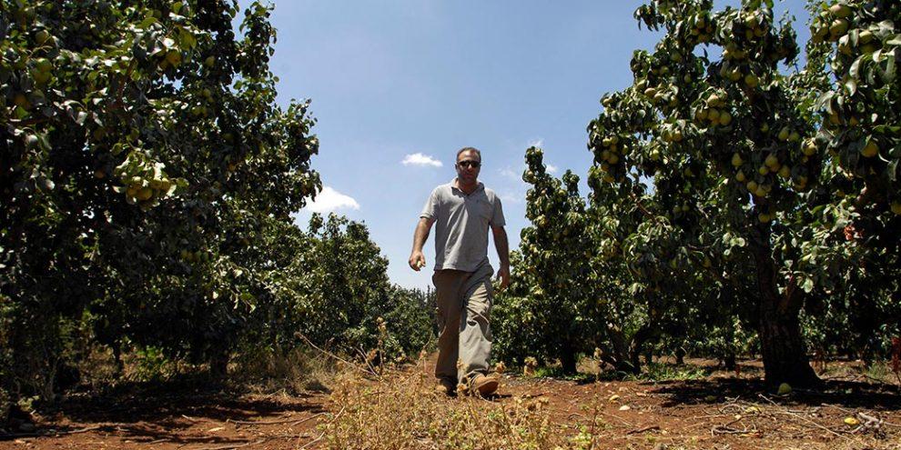 Хваленое израильское сельское хозяйство умирает