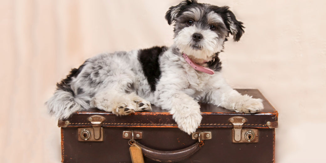 dog--pixabay