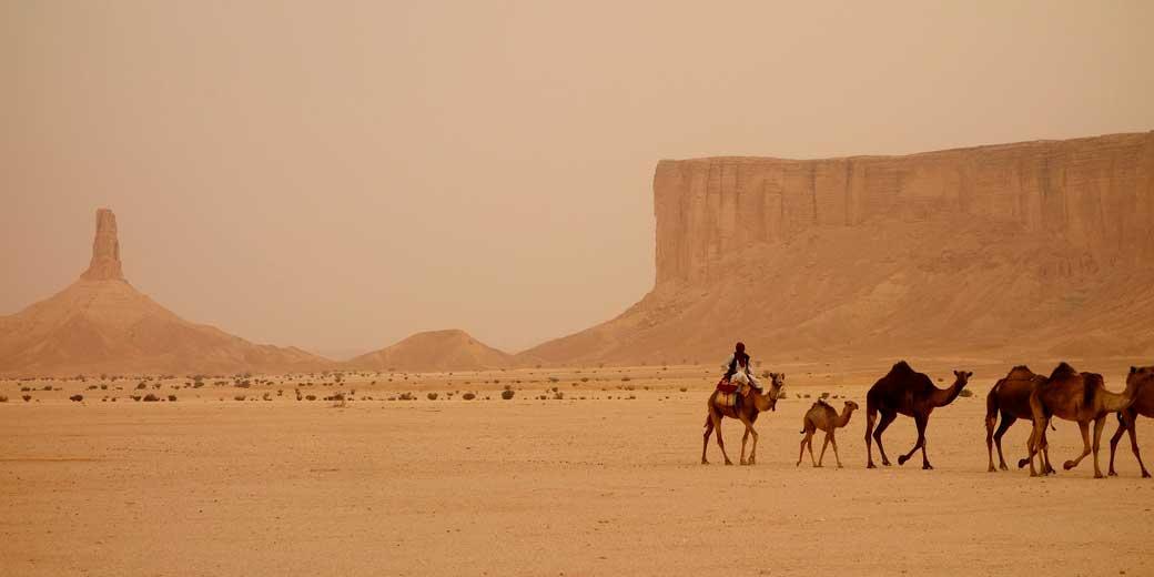 camel-train-pixabay