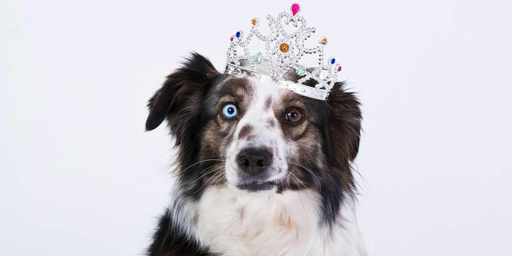 dog-1273056_1920
