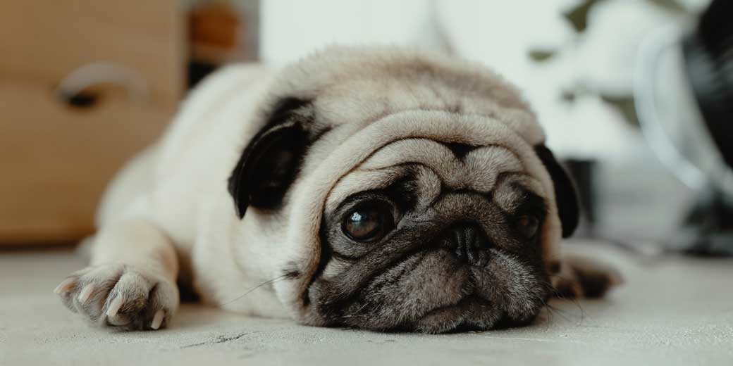 dog-jc-gellidon-TPZNooS1Meg-unsplash