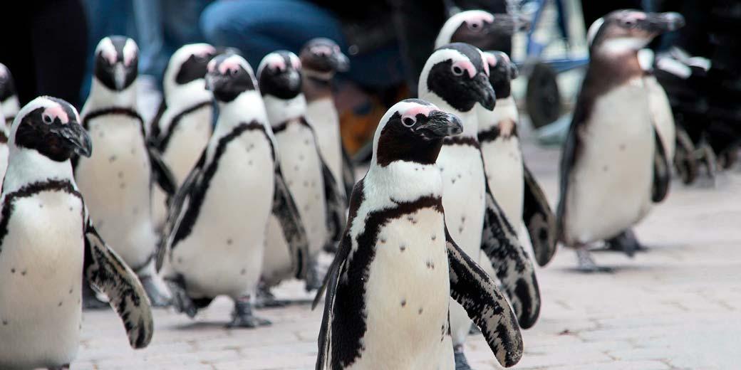 penguin-pixabay