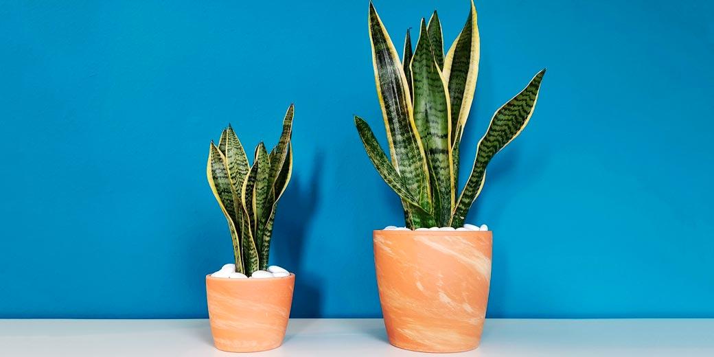 plant-pixabay