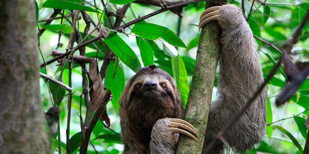 sloth-pixabay