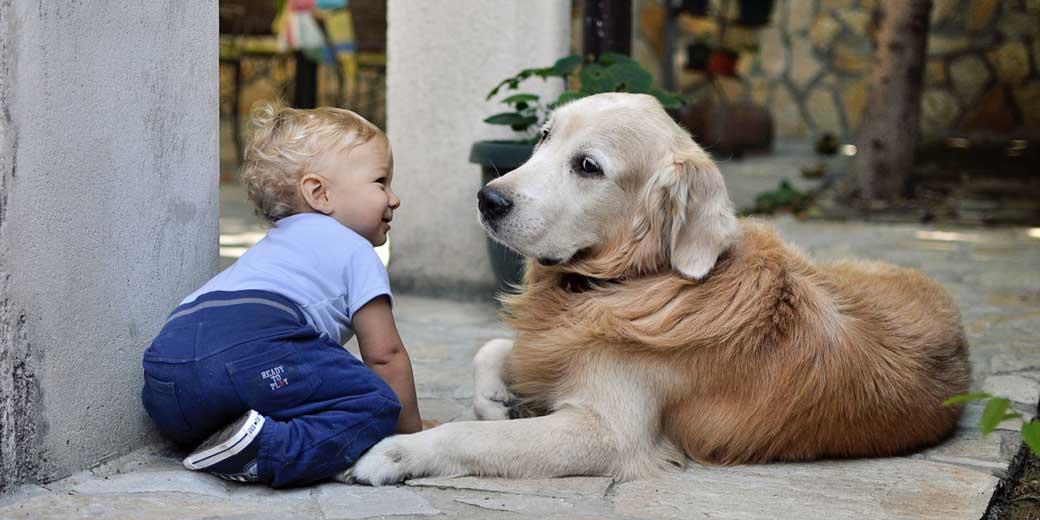 mali-desha-baby-dog-unsplash