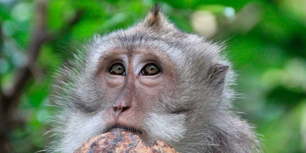 monkey-pixabay