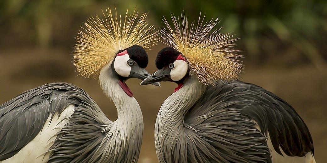 Birds_Love_Pixabay