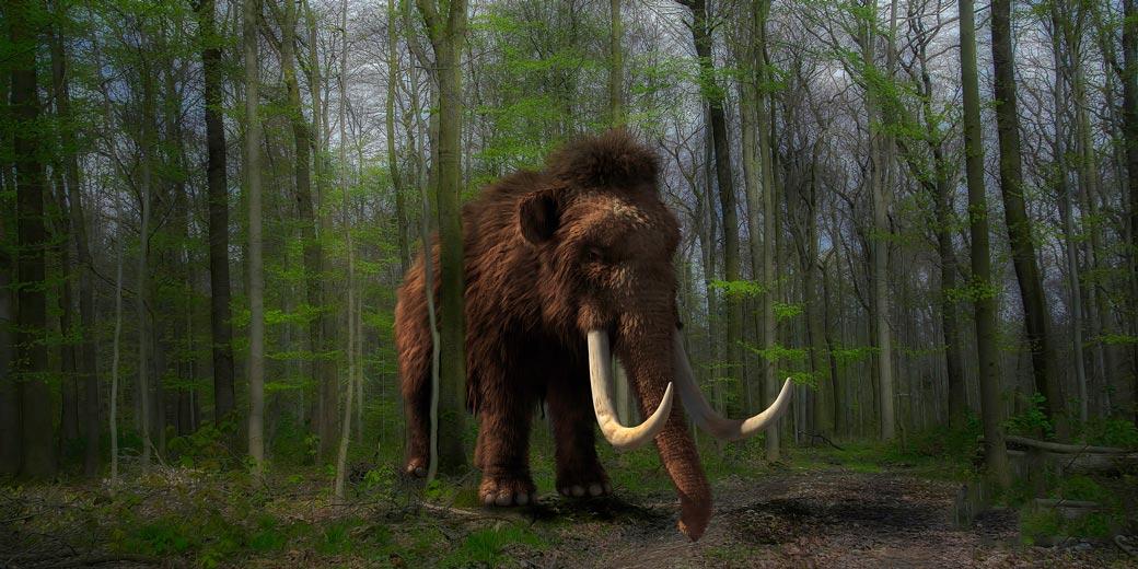 mammoth--pixabay