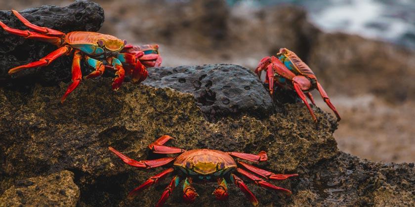 amy-perez-crab-unsplash