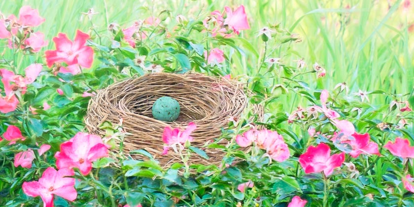 bird-nest-pixabay