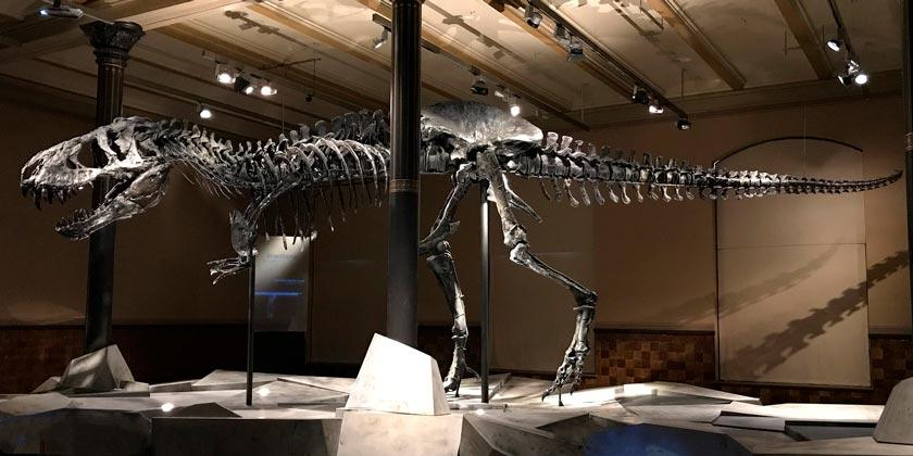 dinosaur-pixabay