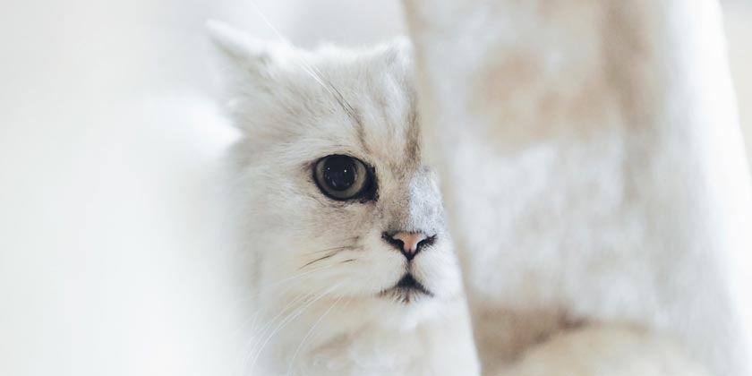 chen-yi-wen-cat-unsplash
