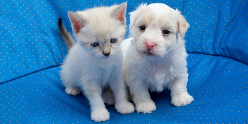 puppy-cat-pixabay