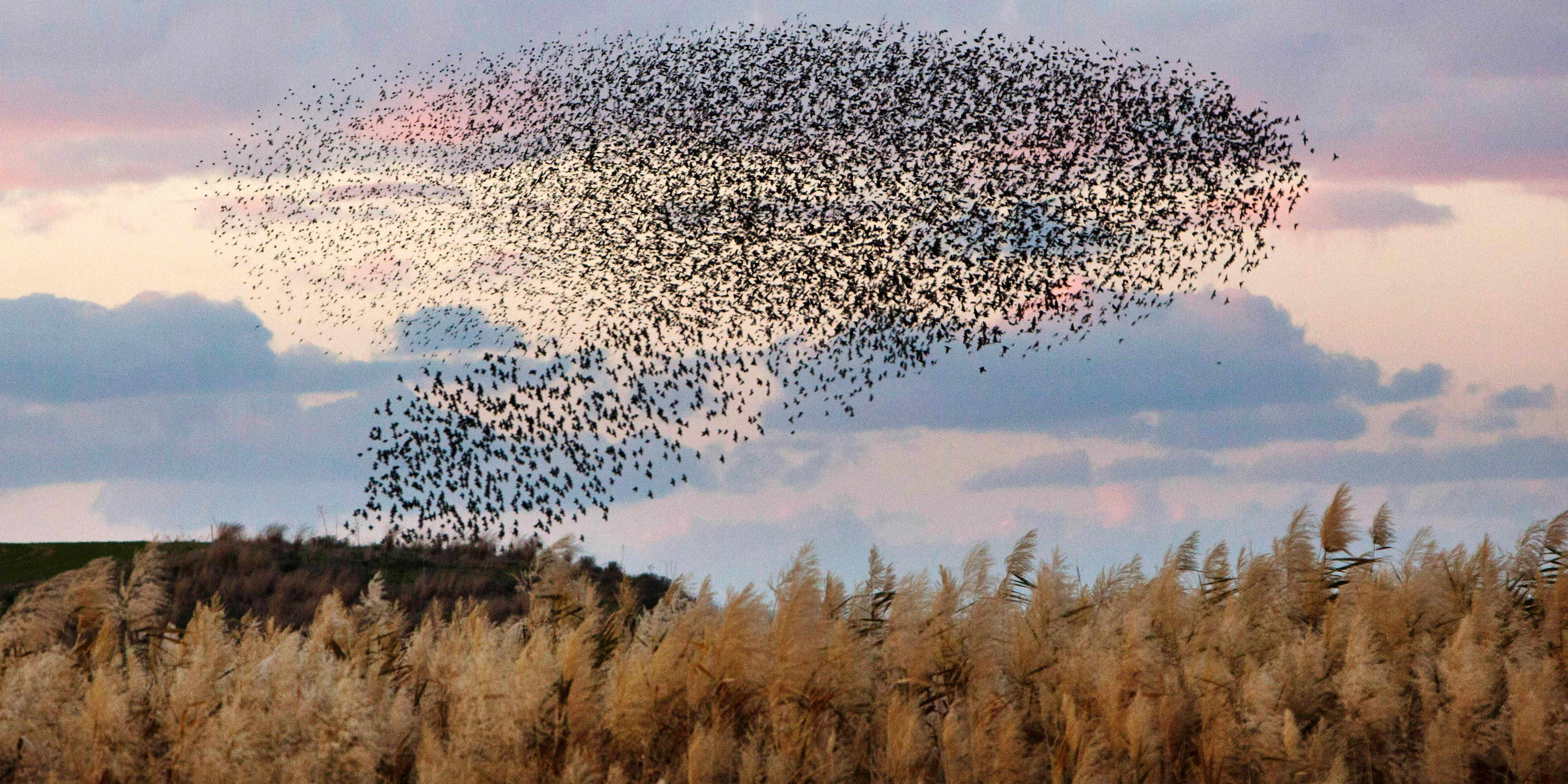 551260_Weather_Negev_birds_Elyahu_Hershkovich