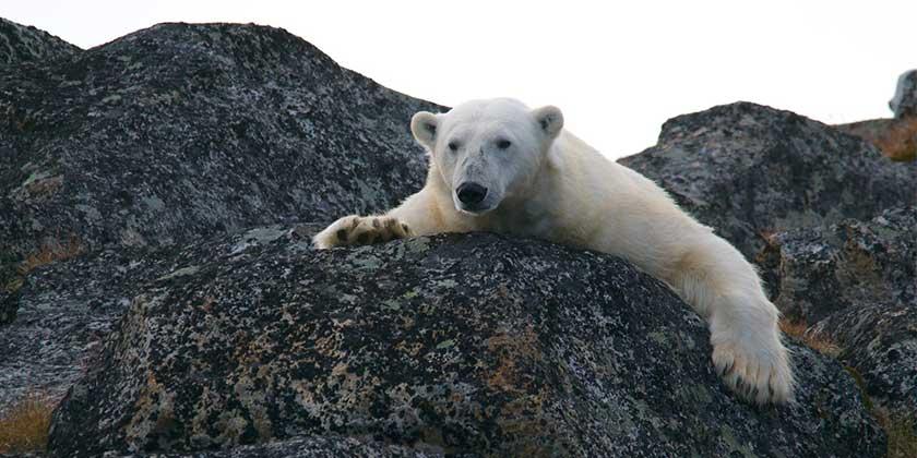 andy-brunner-bear-unsplash