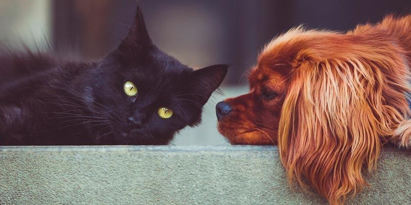dog-cat-pixabay