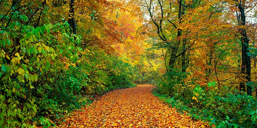 autumn-pixabay