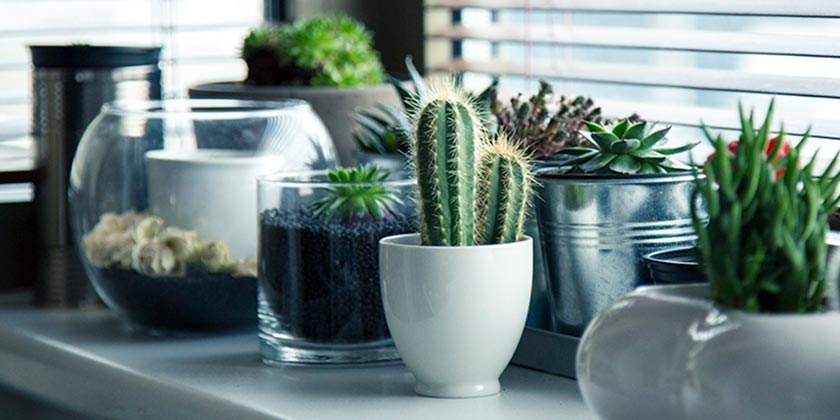 plants-pixabay