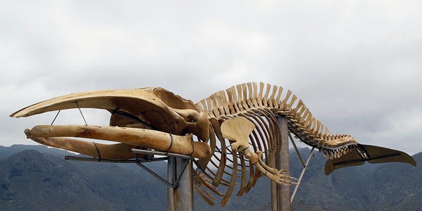 whale-pixabay