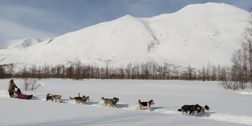dog-sledge_Pixabay