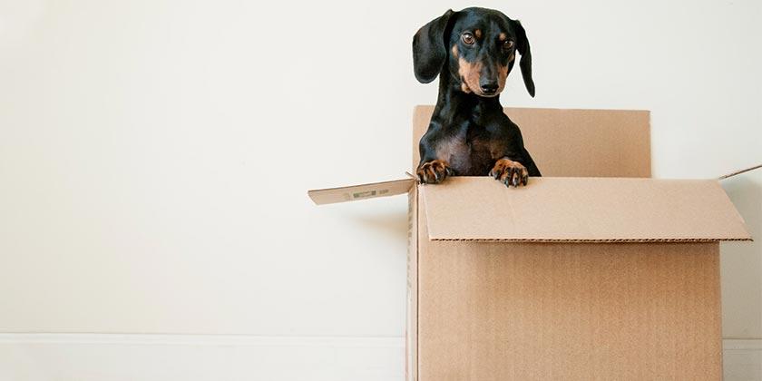 erda-estremera-box-dog-unsplash