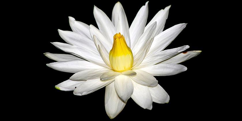 night-flower-pixabay