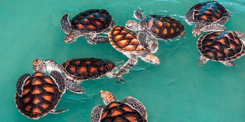turtle-pixabay