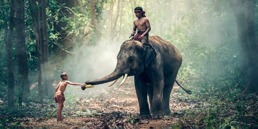 elephant-pixabay