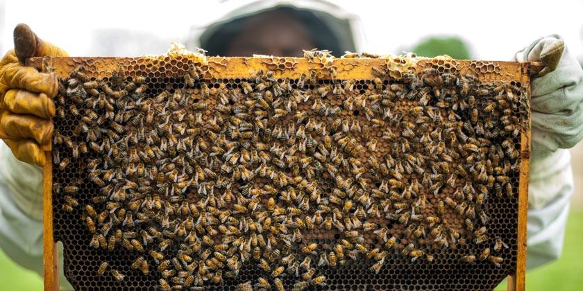 pexels-timothy-paule-ii-bees