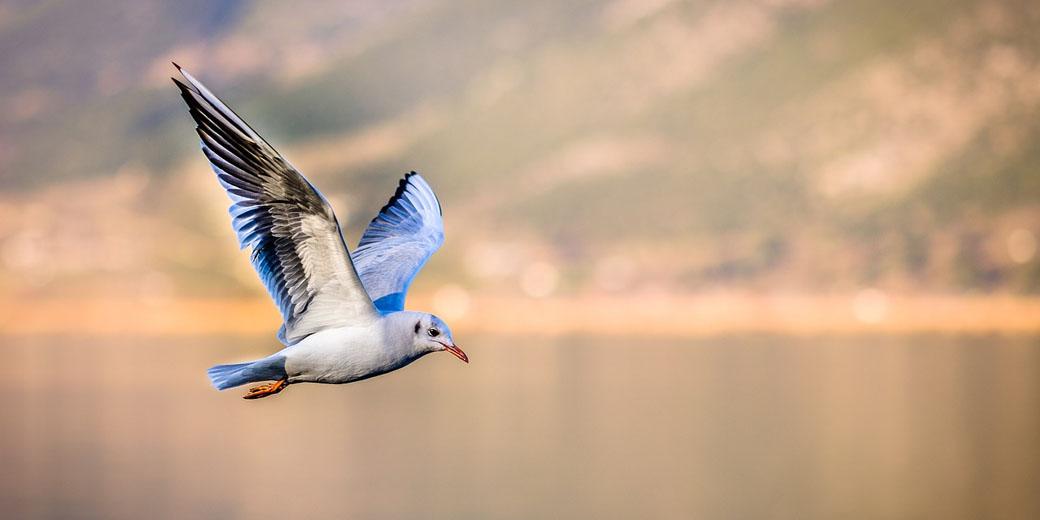 bird pixabay