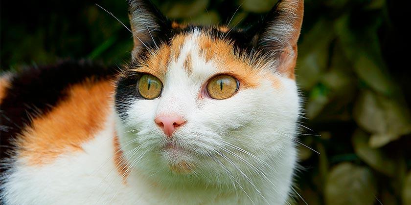 cat-pixabay