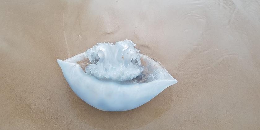 meduza Darya Gershberg