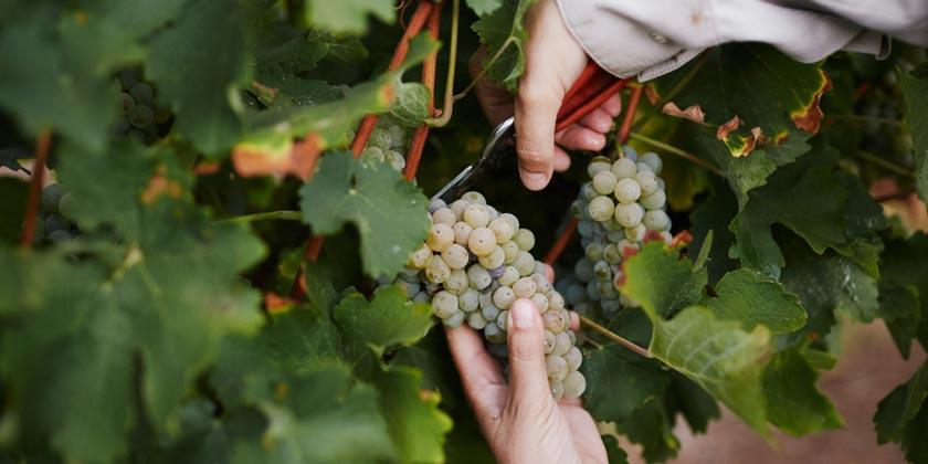 Tabor-Winery