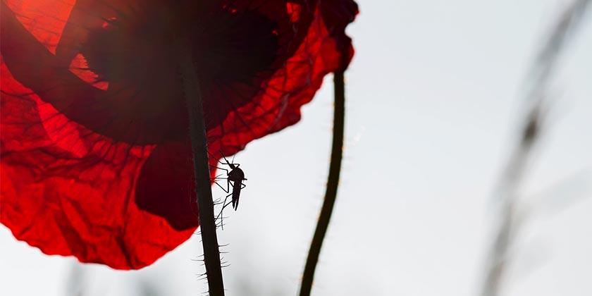lucas-van-oort-mosquito-unsplash