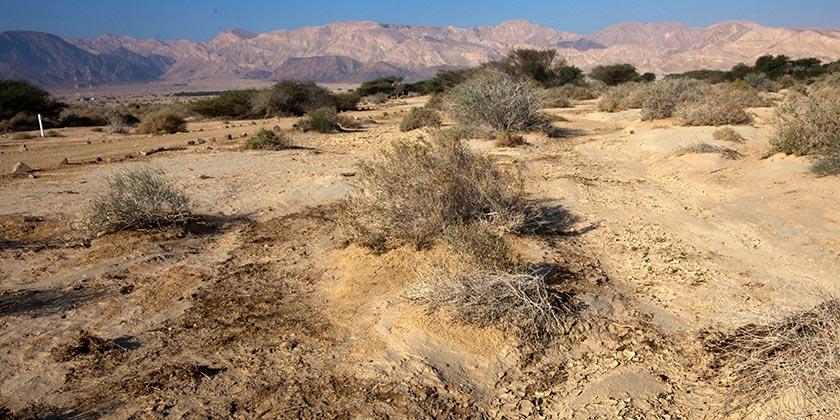 Пустыня Арава. Фото: Элиягу Гершкович