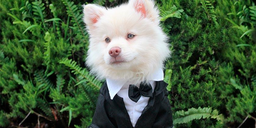 dog-pixabay