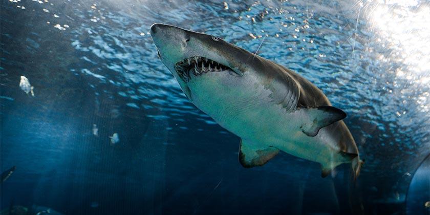 marcelo-cidrack-shark-unsplash