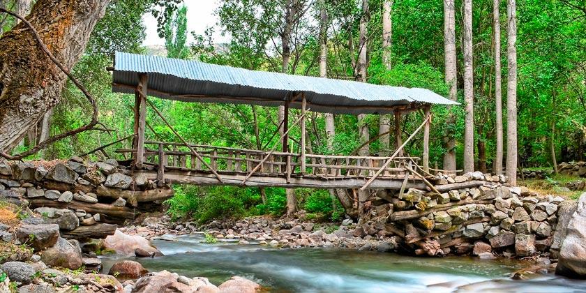 river-forest-pixabay